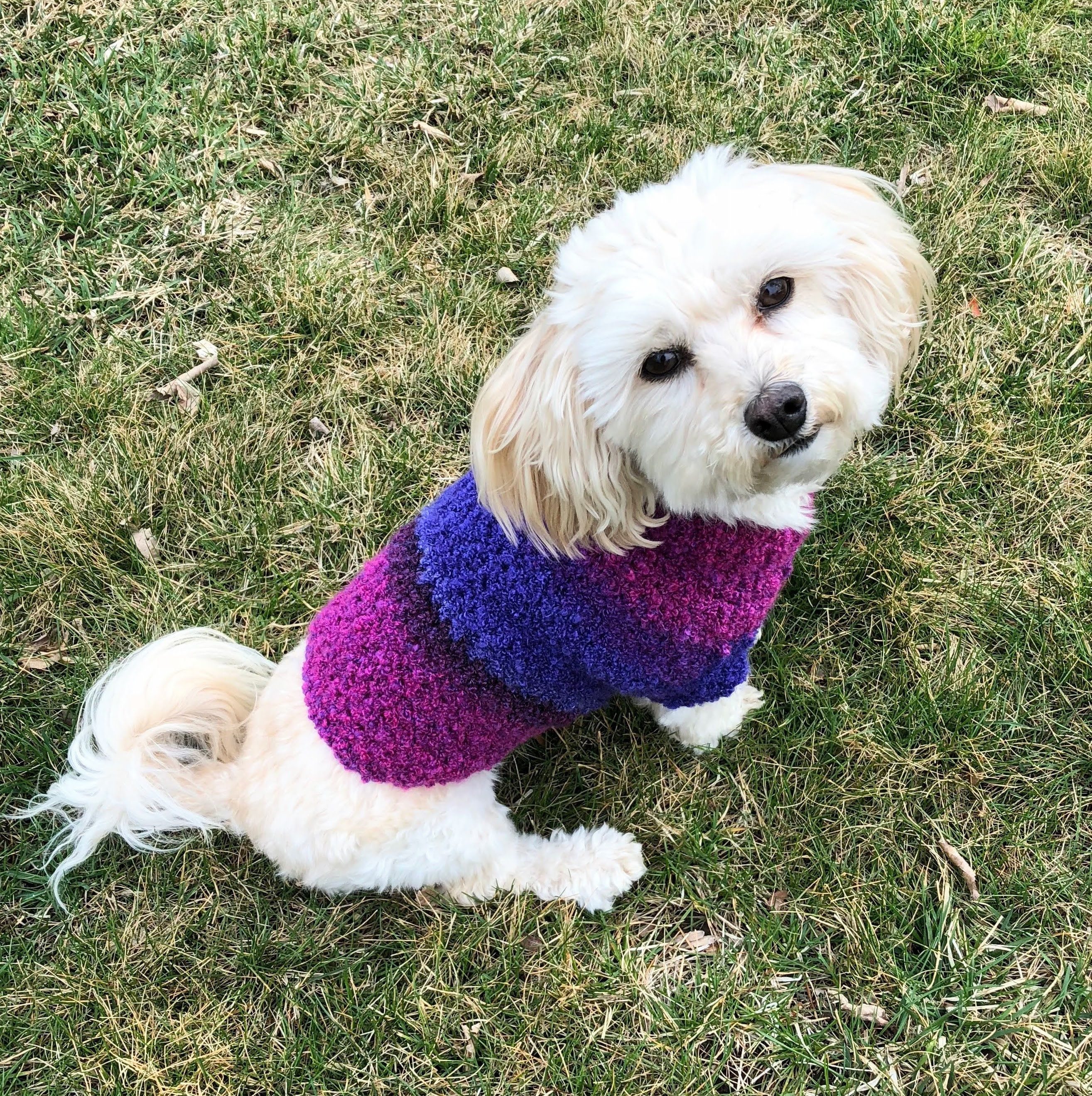 Crochet Dog Sweater Maltese Dog Clothes Purple Puppy Clothes