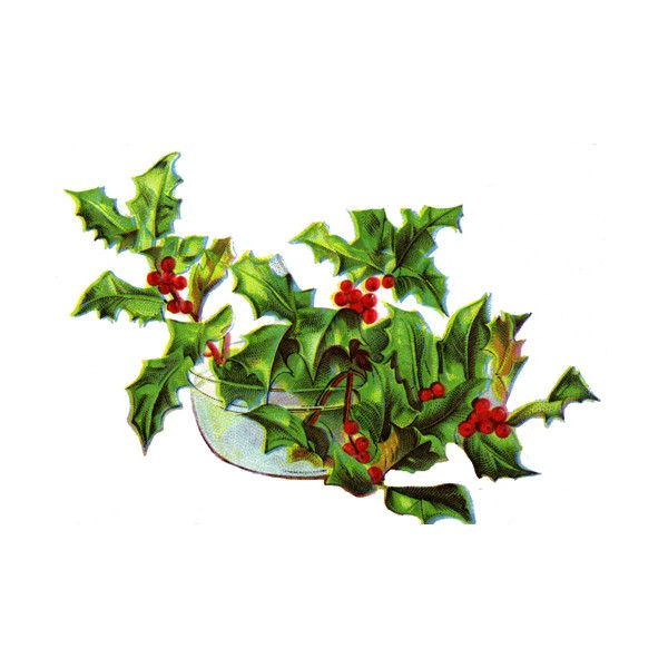 Holly Leaves ❤ liked on Polyvore featuring christmas