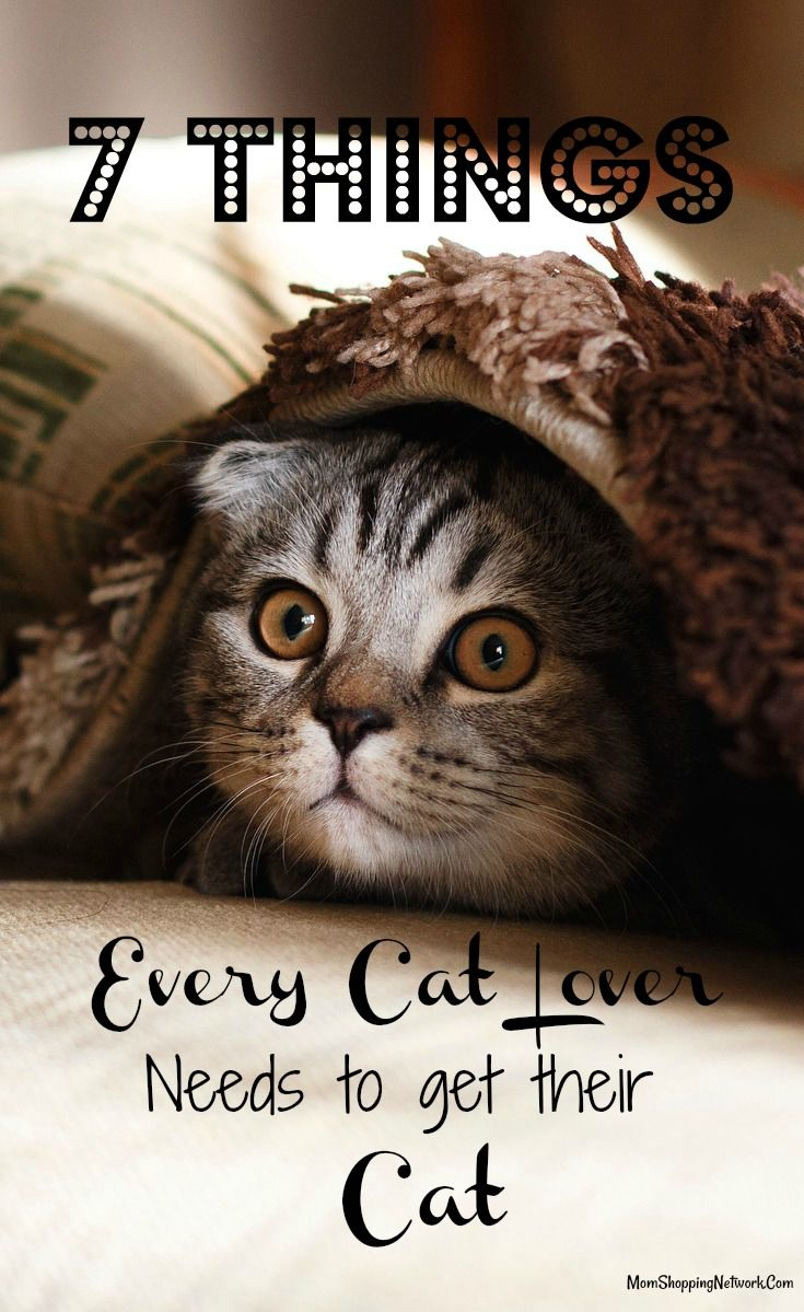 7 Things Every Cat Lover Needs to Get Their Cat Right Now - The Mom Shopping Network
