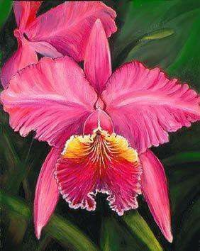 Cattleya Flower Beautiful Orchids Cattleya Orchid Unusual Flowers