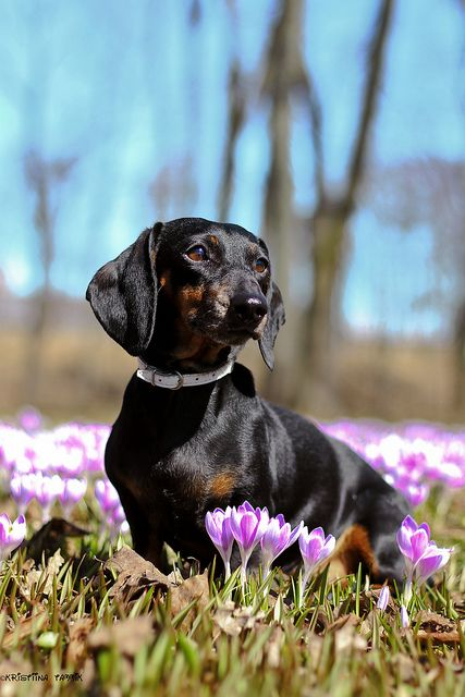 oh spring by athenakristiina on Flickr.