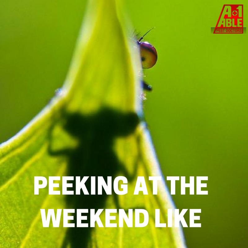 Stinkbug Tip Of The Day Stinkbugprevention Pestdoctors Tipoftheday Bug Exterminator Pests