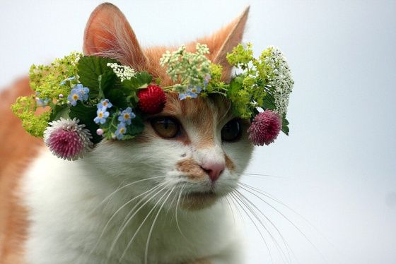 Like my flowery hat kinda thing?