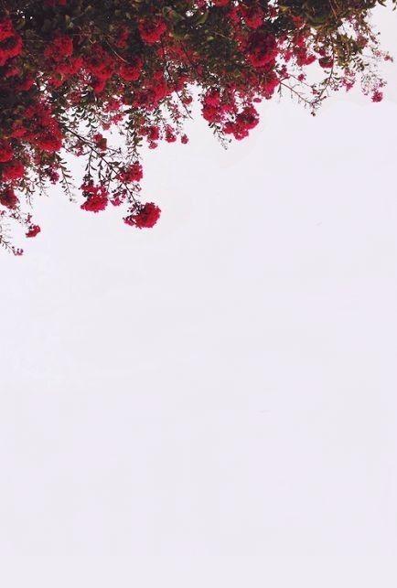 Photo De L Album Photo Google Photos Avec Images Fond D Ecran Fleur Rose Fond D Ecran Telephone