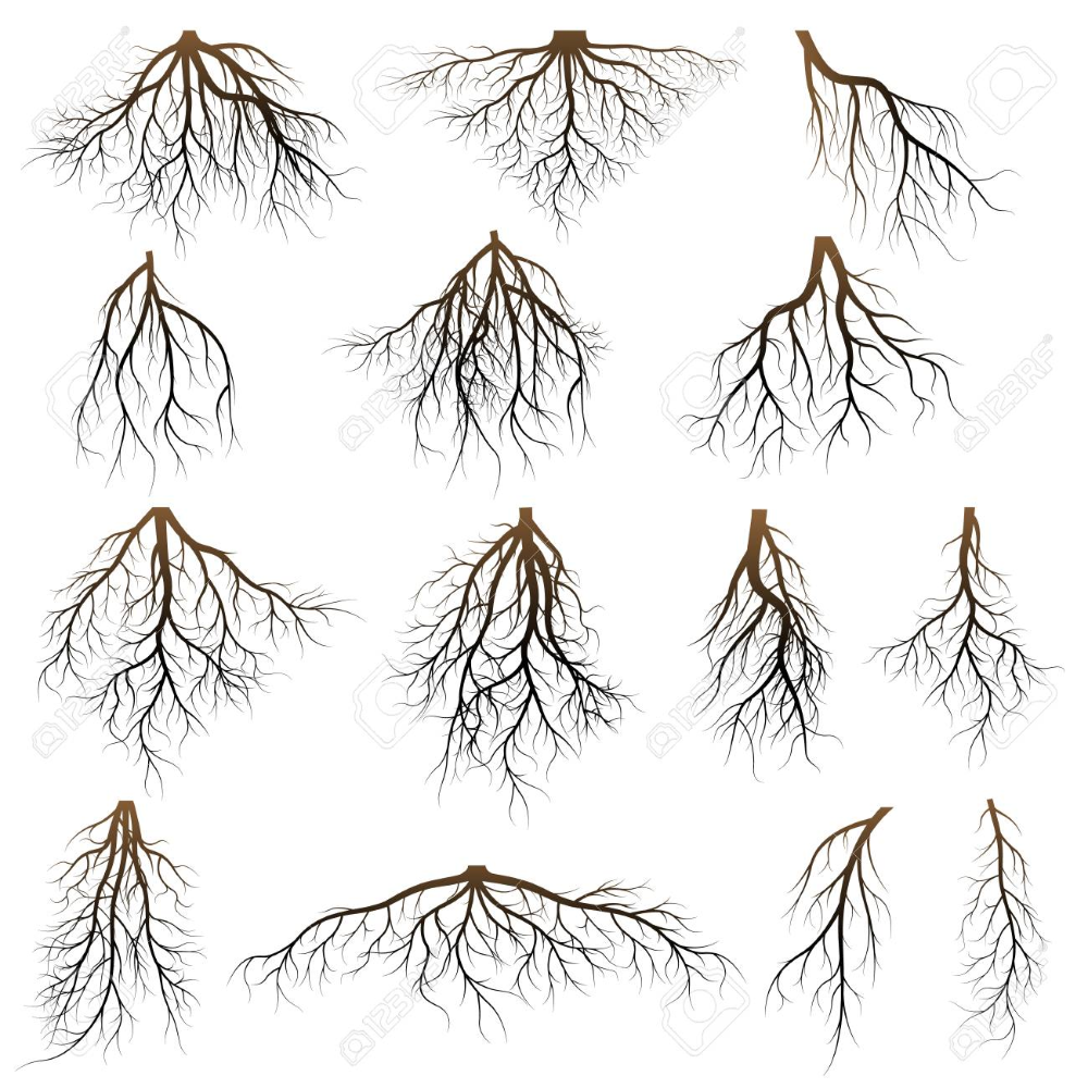 The Roots Of Trees Tree Trees Root Png Transparent Clipart Image And Psd File For Free Download Roots Tree Clipart Images