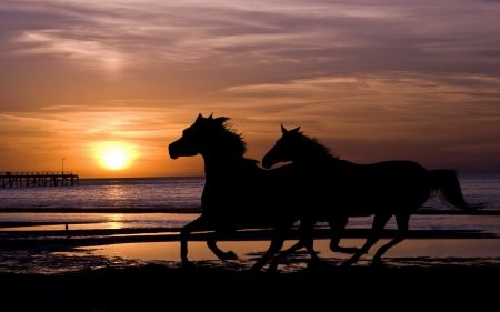 Black horse on the beach at sunset on the beach horses black horse on the beach at sunset on the beach sciox Images