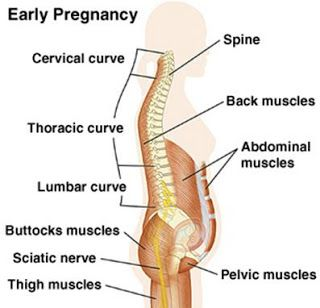 muscle pain early pregnancy