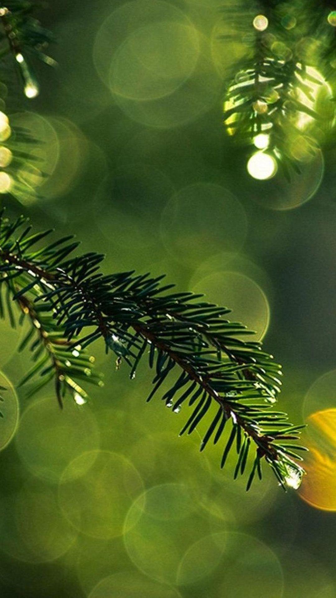 Nature dew pine tree leaf branch blur iphone 6 plus - Pine tree wallpaper iphone ...