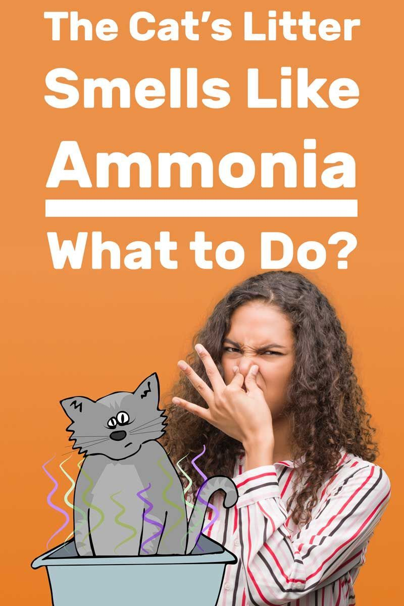 The Cats Litter Smells Like Ammonia  What to Do Article by litter