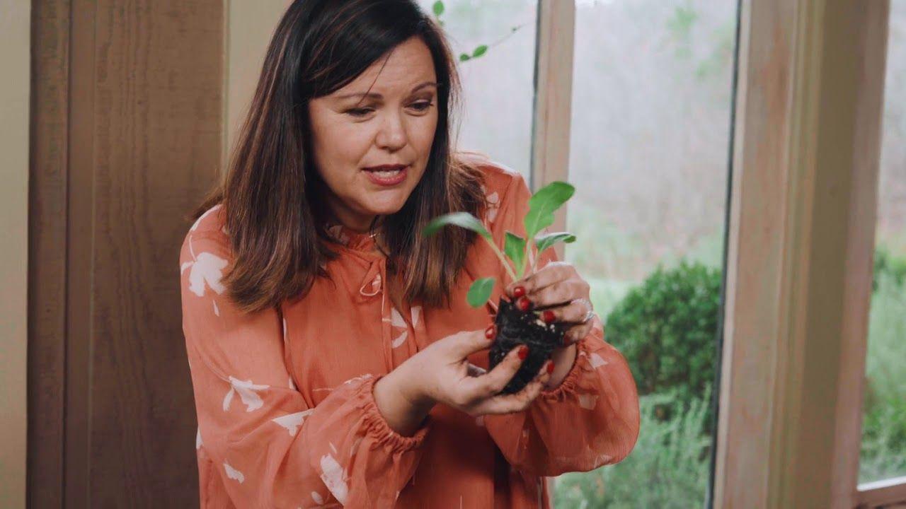Indoor Outdoor Amazon Vegetable Garden In 2020 With 400 x 300