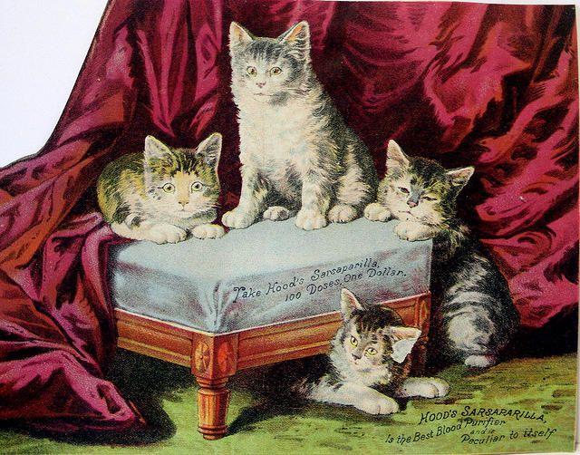 Lots of vintage cat pictures