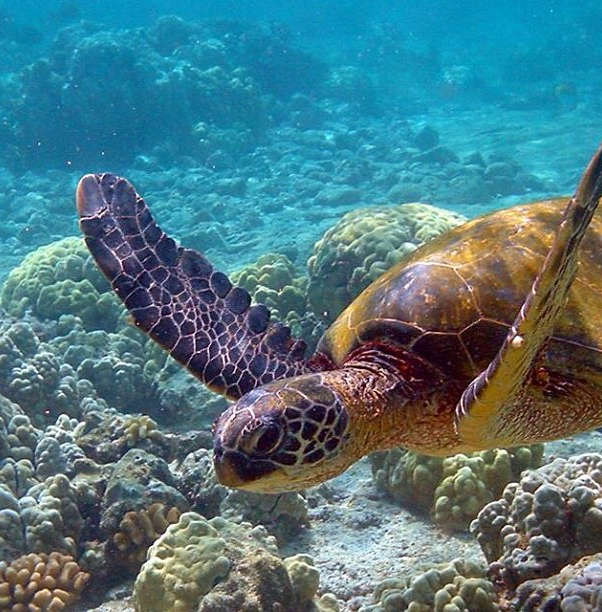 Cant wait to swim with the Sea turtles at Leah's house. Costa Rica here we come!