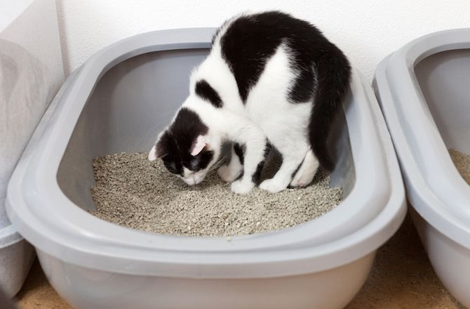 Top 10 Ways to Stop Your Cat from Peeing Outside the