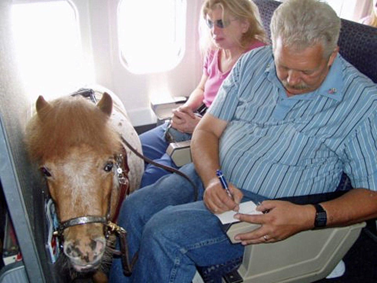 Airline erlaubt offiziell MiniPferde an Bord doch