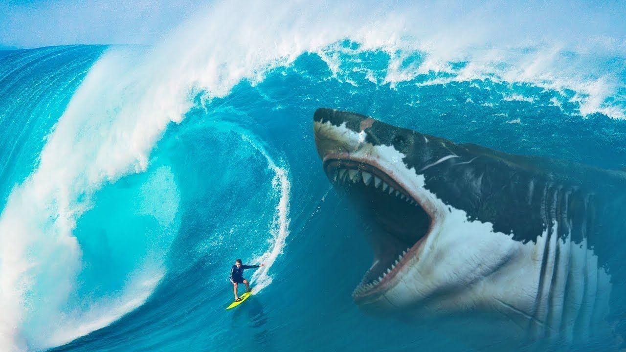 mơ thấy cá mập đánh con gì