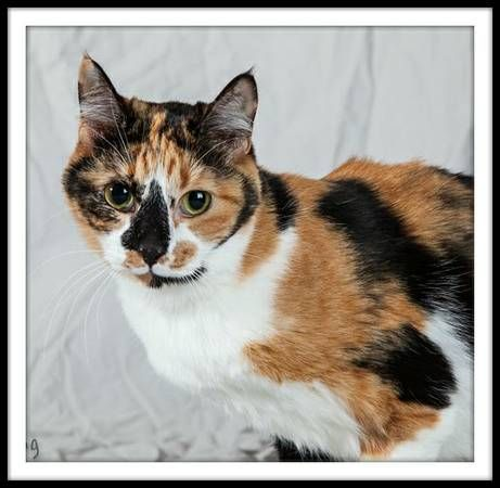 Image 1 Pets Adoption Options Furry Friend