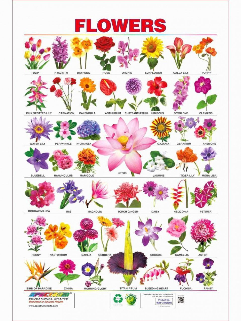List Of All Flowers Best Of 23 Flower And Names List Pelfusion Flowers Name List Pretty Flower Names Flower Images With Name Flower Names