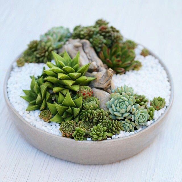 Arrangement De Plantes Grasses Jardin Plat Succulentes