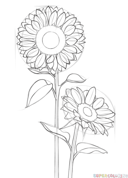 How to draw a sunflower step by step drawing tutorials for kids and beginners
