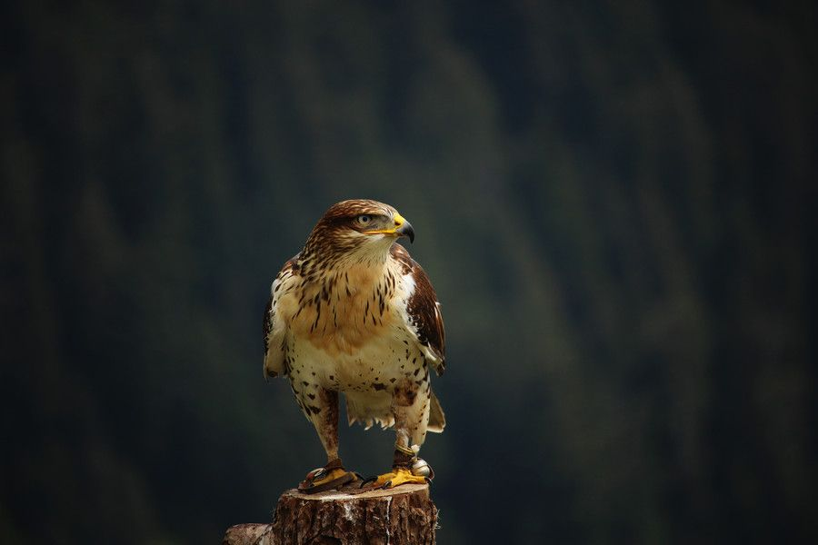 Photo Hawk by Ekaterina A on 500px