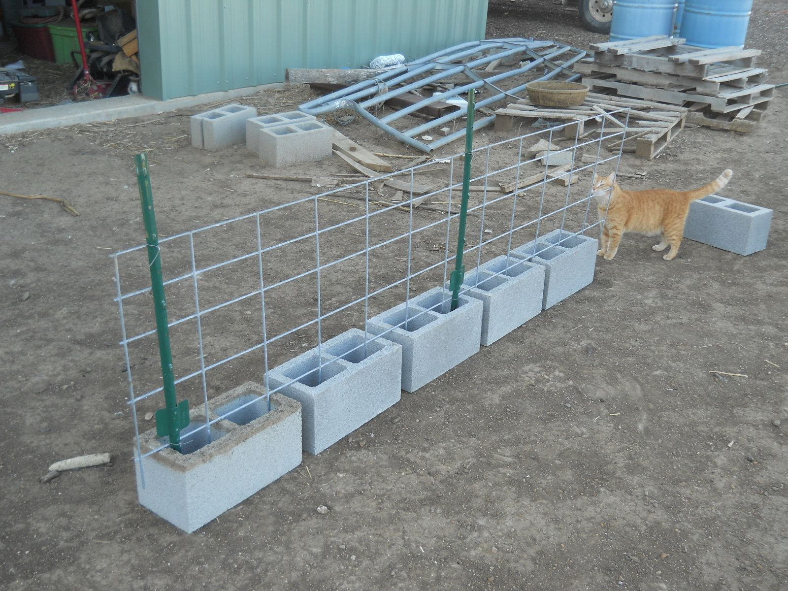 3-foot t-posts wired to cattle panel | Garden | Pinterest | Cattle ...