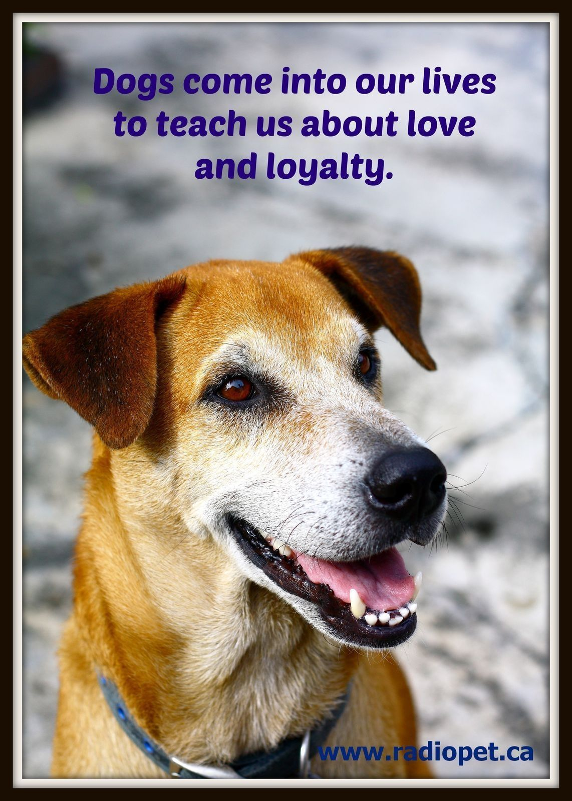 Dogs Come Into Our Lives To Teach Us About Love And Loyalty Qotd