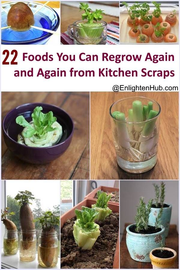 22 Foods You Can Regrow Again And Again From Kitchen Scraps