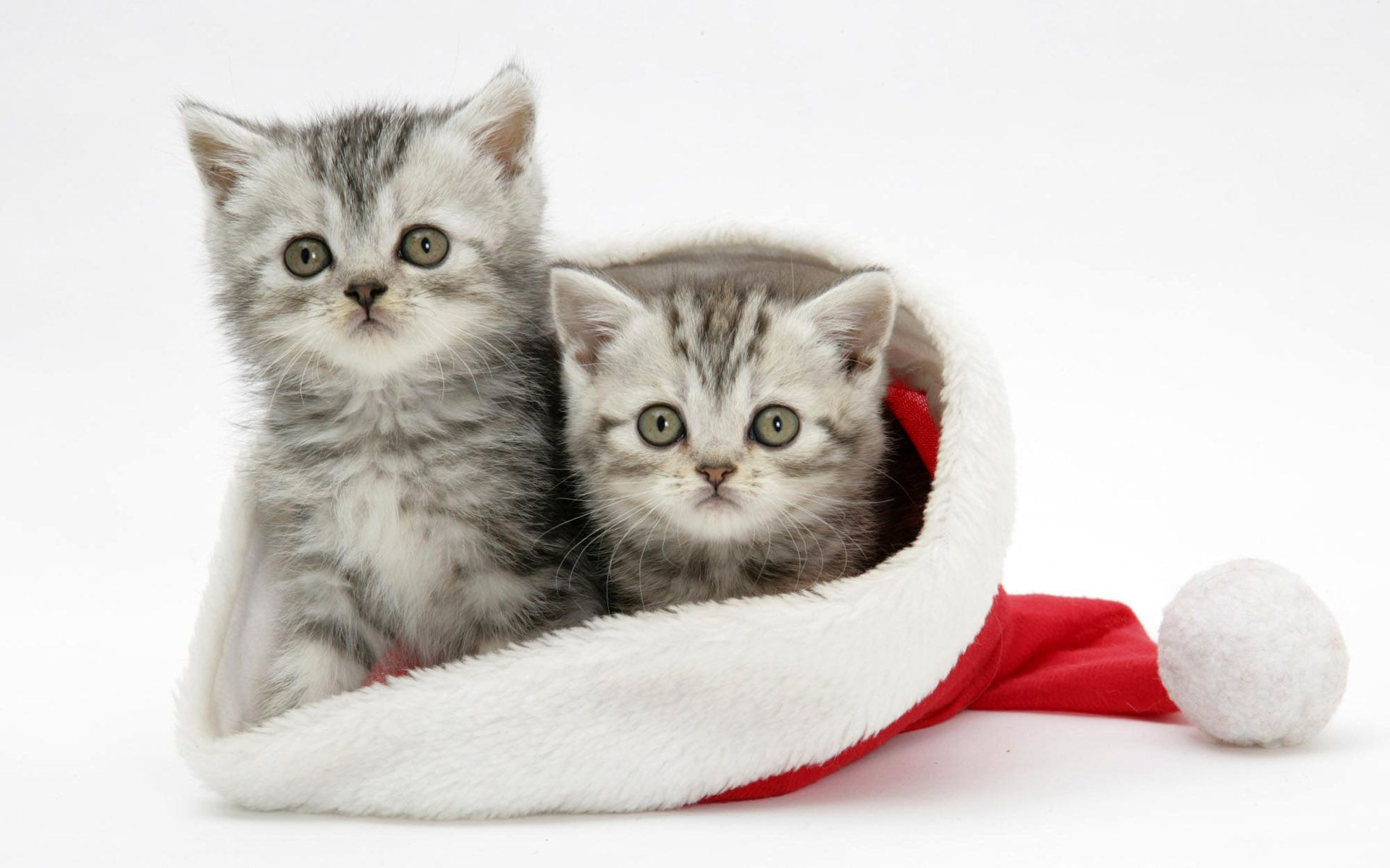 christmassantaandanimalswallpaper Friends in Need Animal