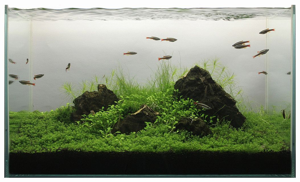 Upgraded Fluval Spec V   First High Tech Tank, Watch Me Make Mistakes!