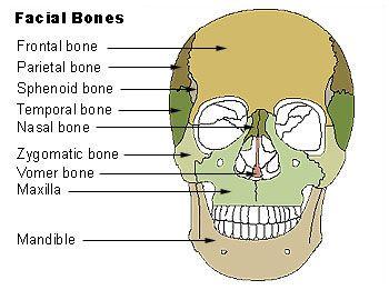Skull Anatomy Quiz | Skull Bones Quiz | Orbital View | Cranial ...