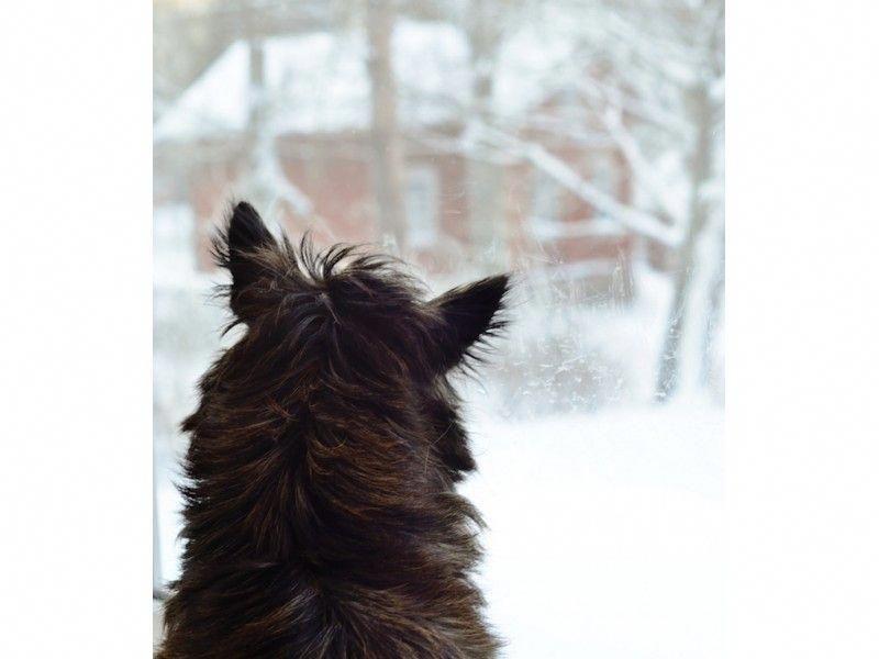 Basic Dog Training Techniques Dogtrainingpaysoff Dog Behavior