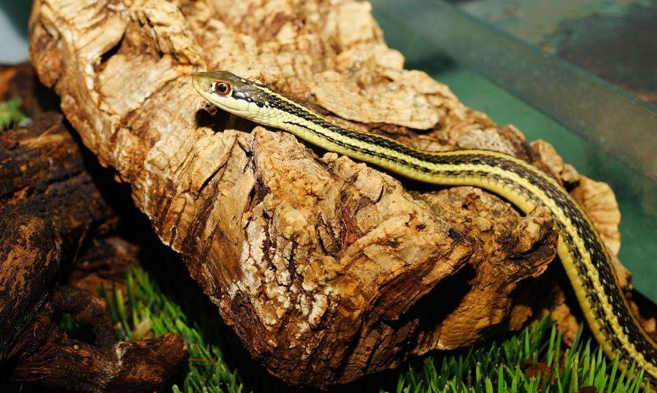 New free stock photo of wood animal reptile #freebies #FreeStockPhotos
