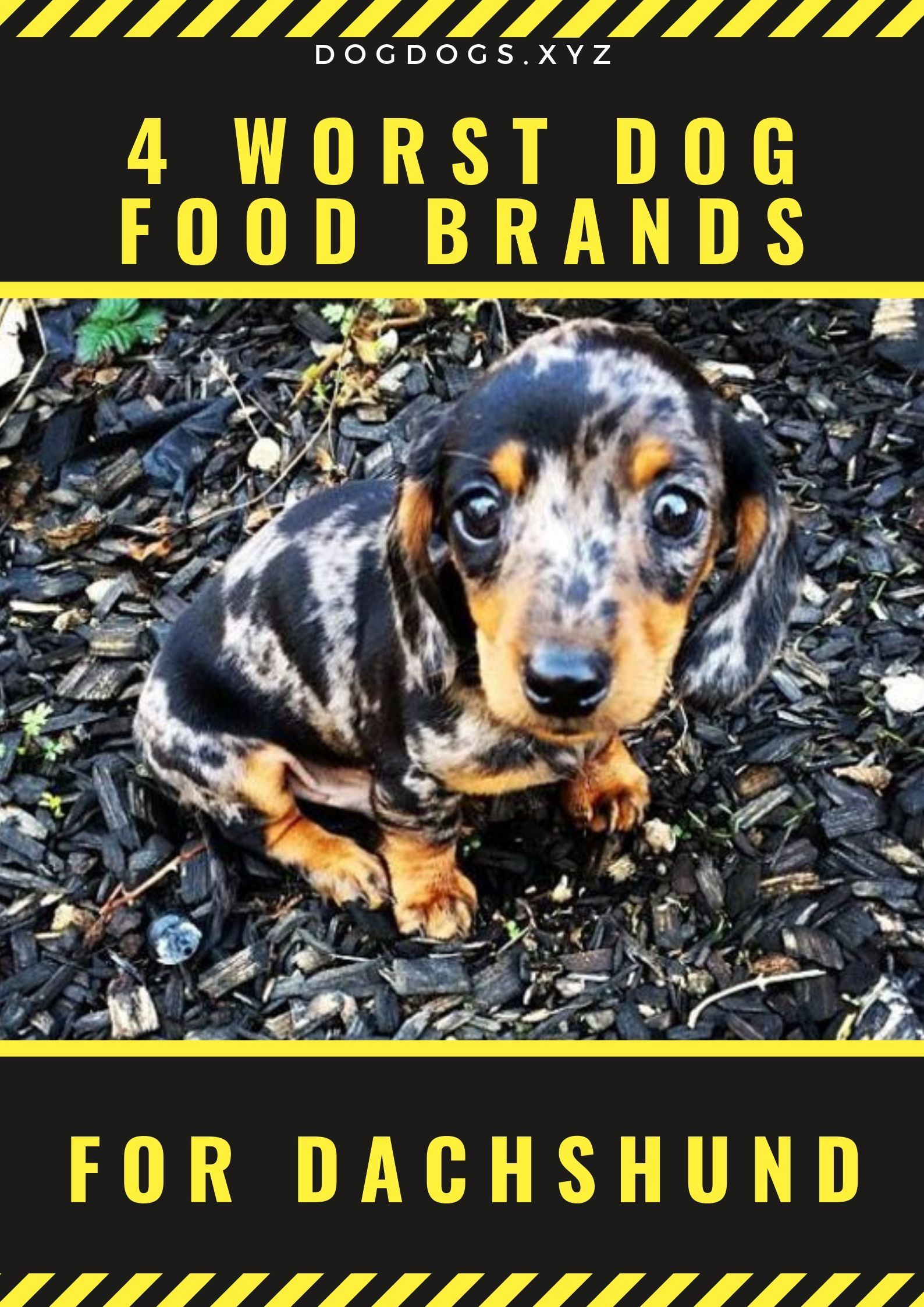 4 Dog Food Brands To Avoid Dogdogs Dog Food Brands Dog Food Recipes Dogs
