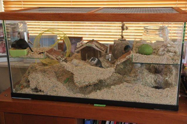 gerbil terrarium