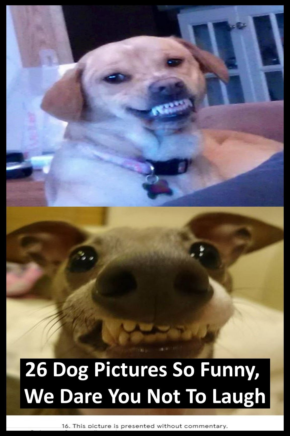 26 Dog Pictures So Funny We Dare You Not To Laugh Dog Pictures