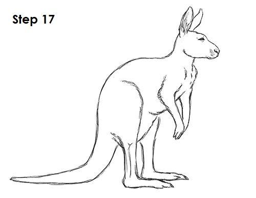 Kangaroo Drawing 17