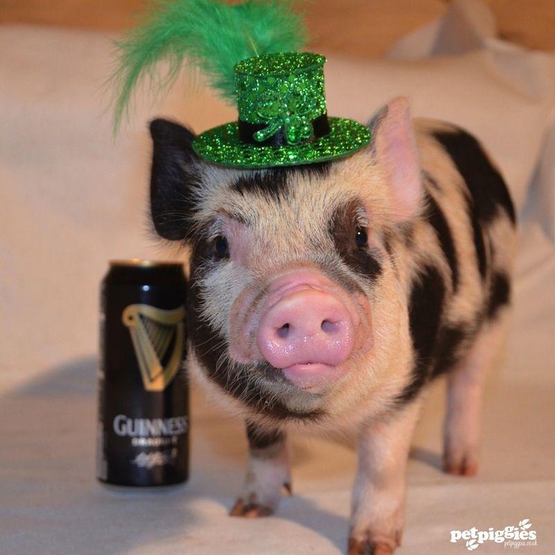 Happy st patricks day to our irish friends around the