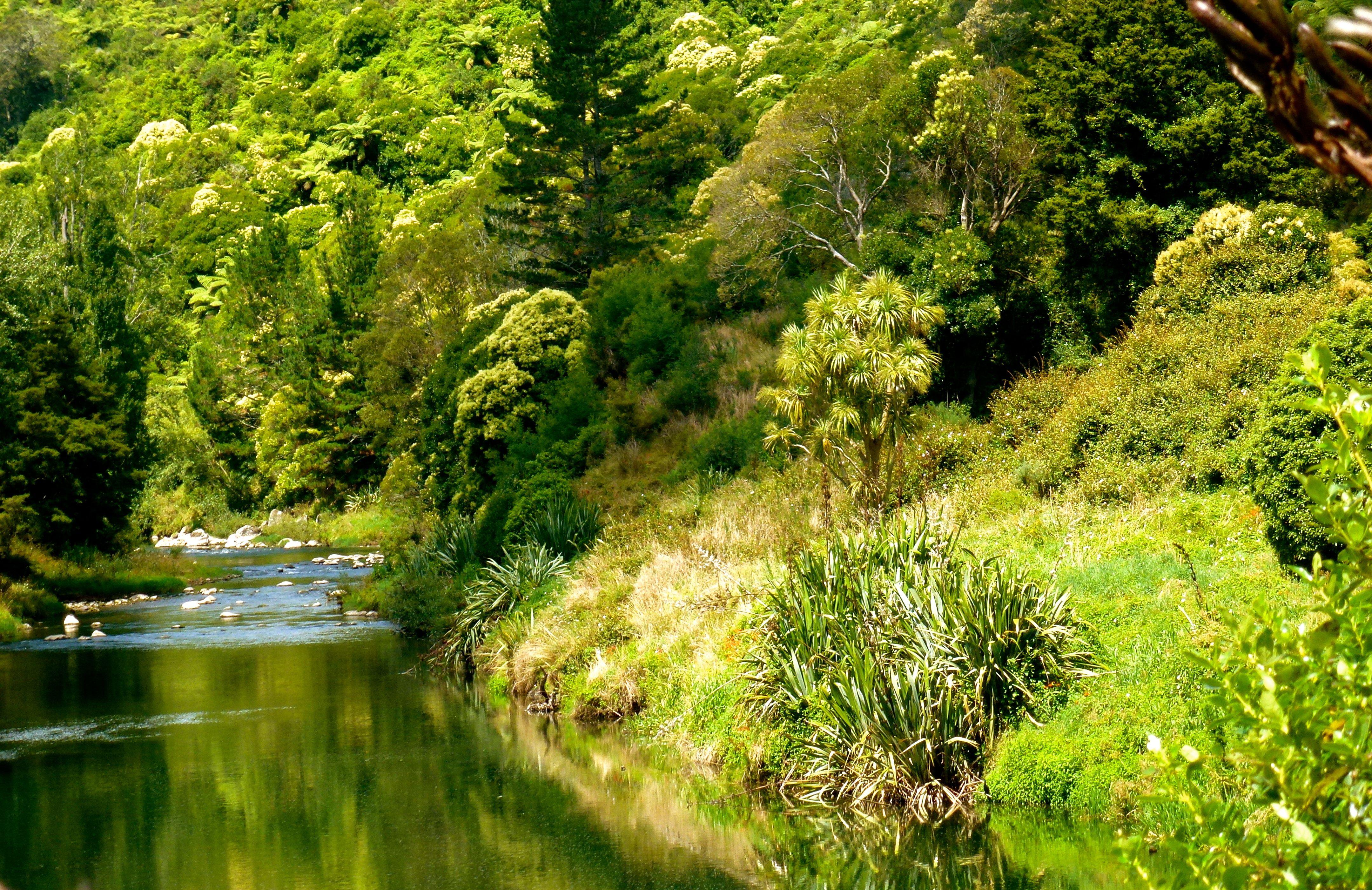 Skachat Oboi Les Reka Priroda Ohinemuri River Razdel Priroda V