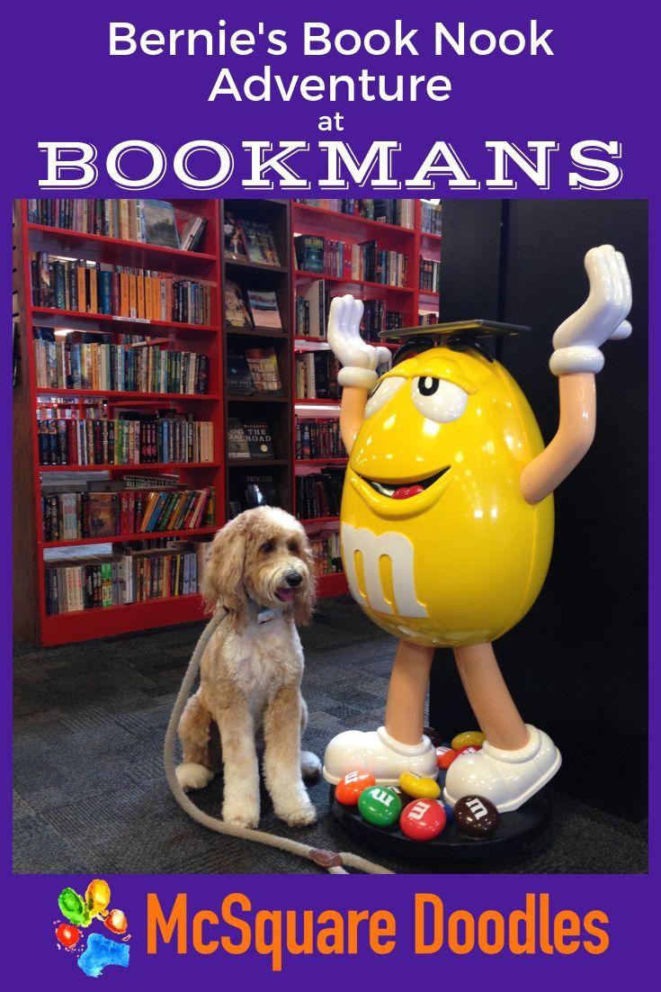 Bernie S Book Nook Adventure At Dog Friendly Bookmans Dog