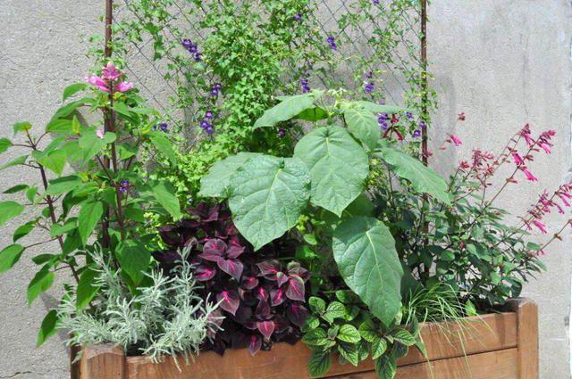 voici une id e de composition pour une grande jardini re fleurie de l 39 t l 39 automne avec une. Black Bedroom Furniture Sets. Home Design Ideas