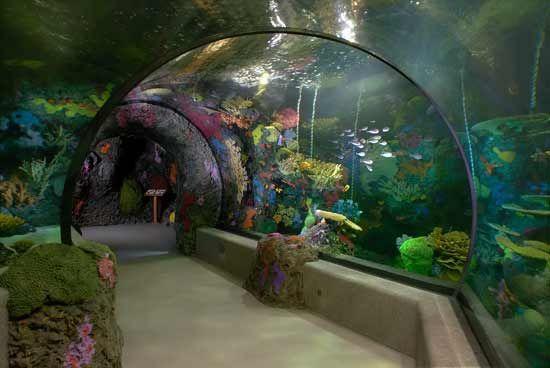 Virginia Aquarium And Marine Science Center Beach Va Peceras Acuario Lugares