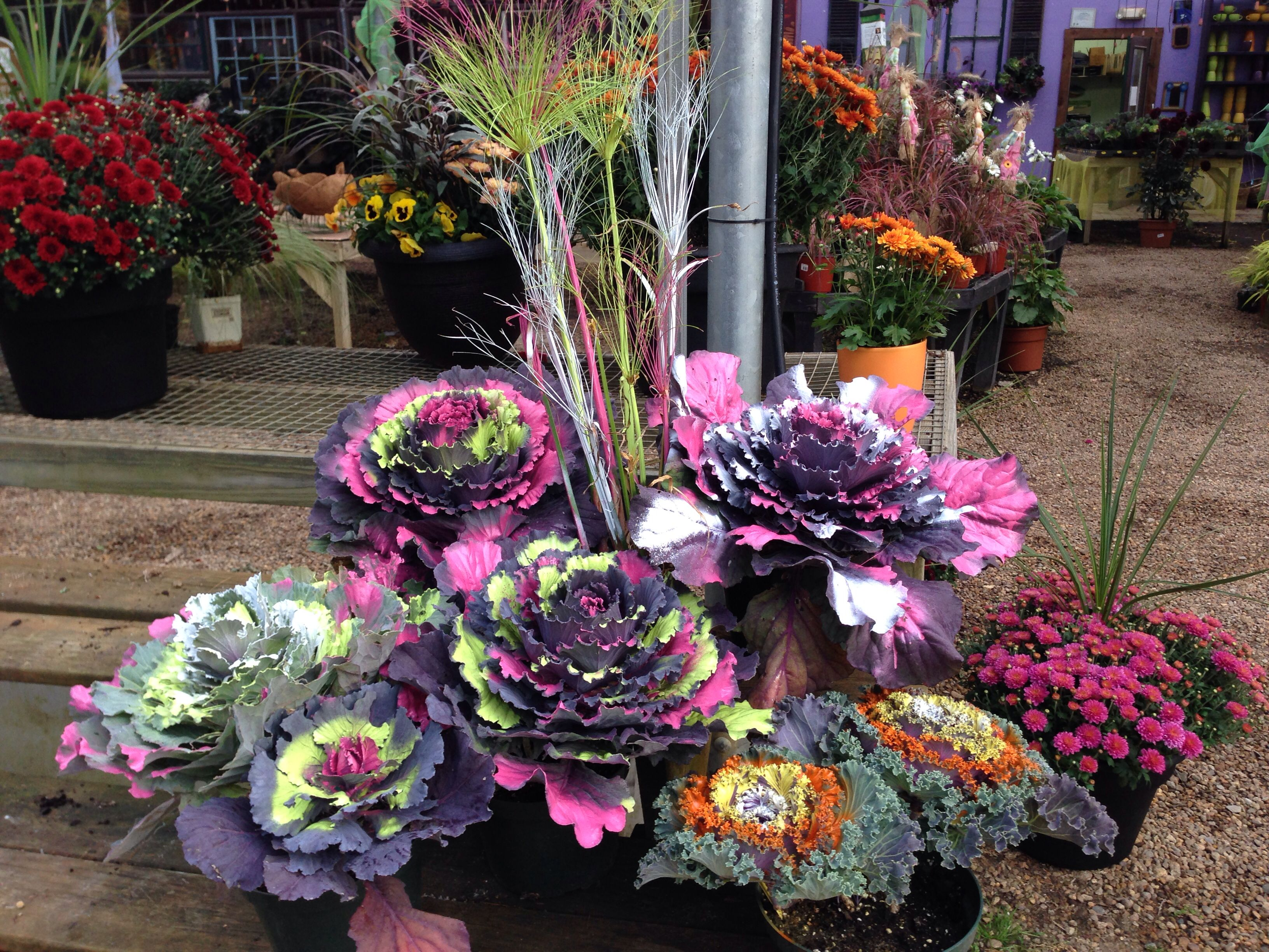 Ornamental Kale with a little whimsy. Bemis Farms Nursery