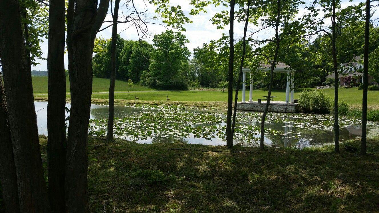 Pond, gazebo and geese