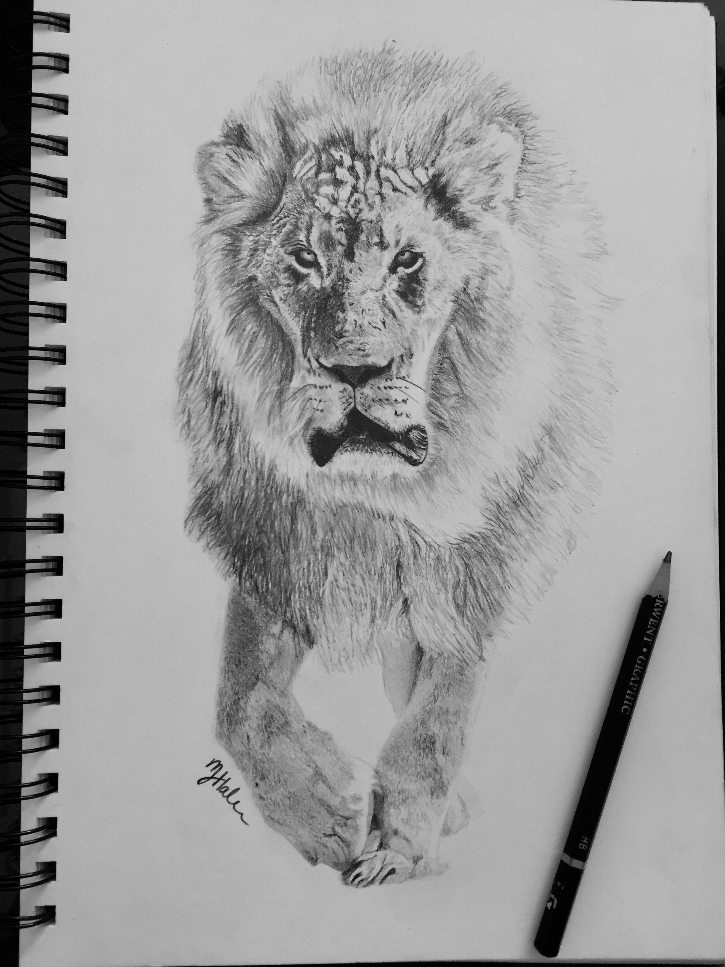 Lion walking sketch Black and white Pencil drawing