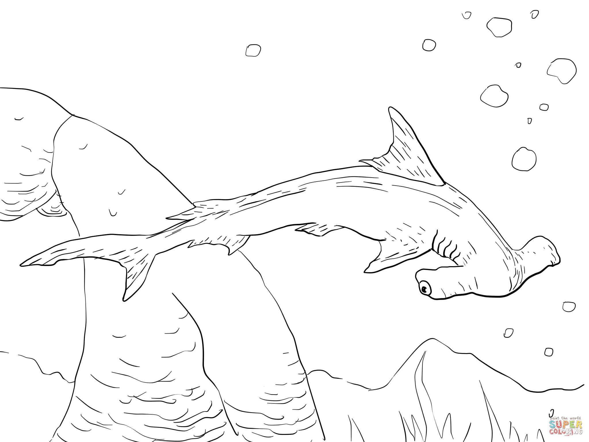 shark coloring pages to print Google Search Shark Facts