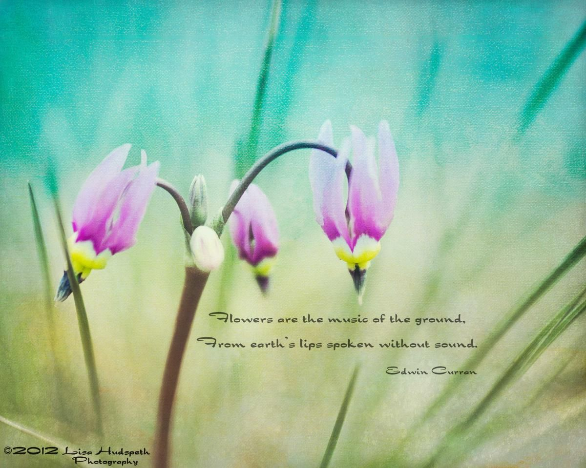 Quotes About May Flowers Quotesgram To Think About Pinterest