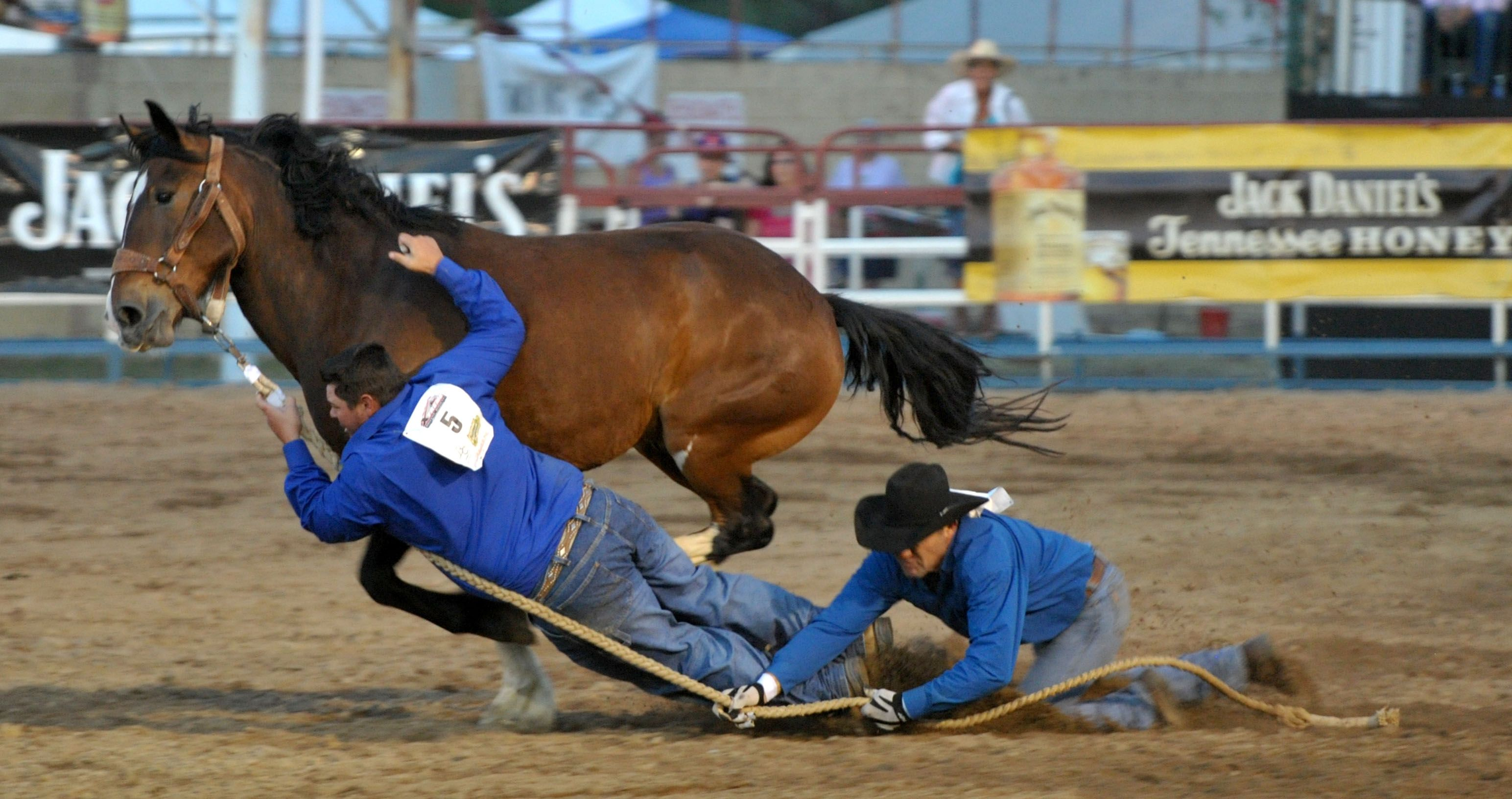 Wild Horse Race Gets Each Rodeo Performance Off To A Rowdy