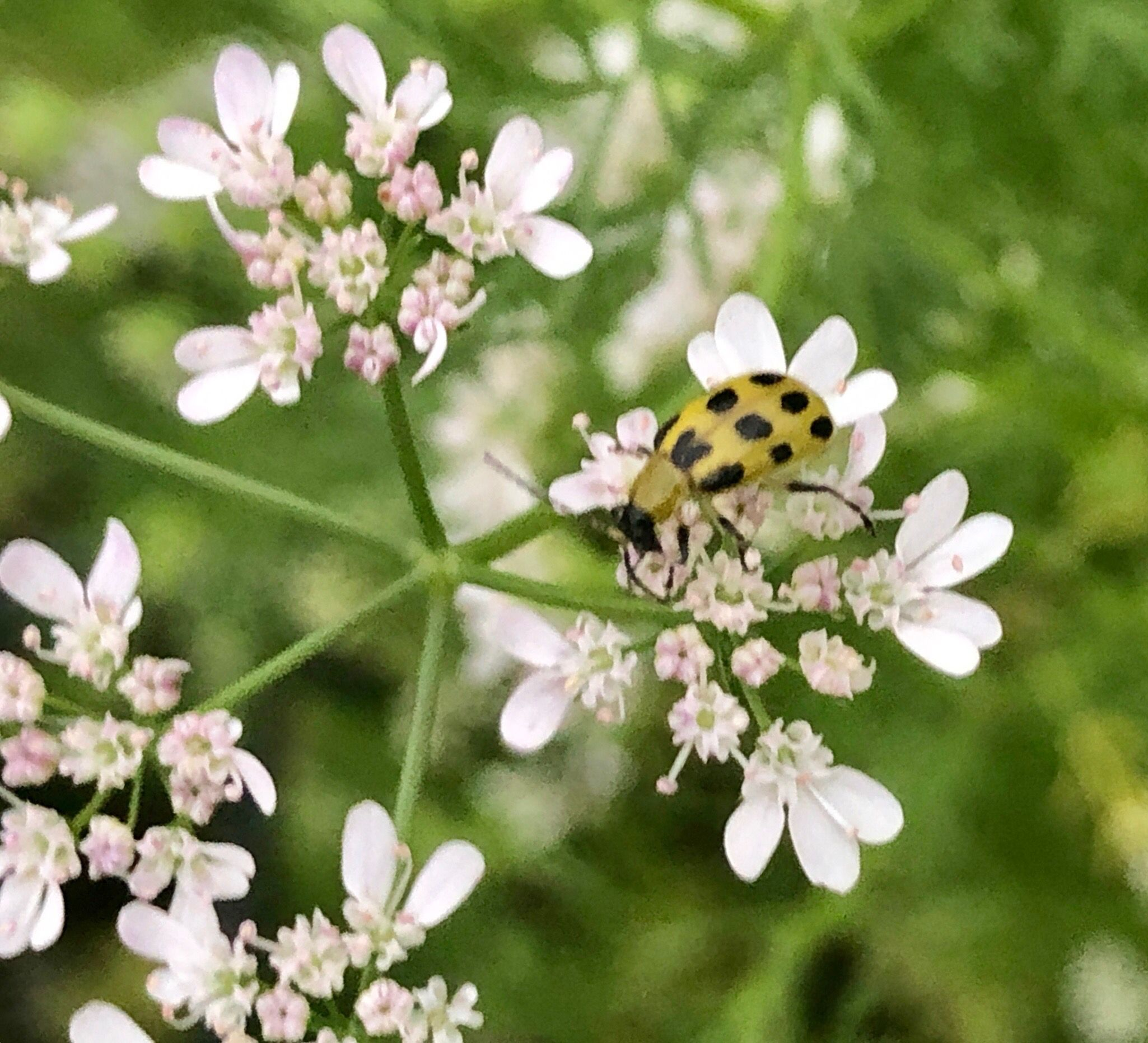 Pin by From Seed to Spoon on Managing Garden Pests