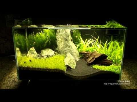 fluval edge mit extra beleuchtung nano aquascape. Black Bedroom Furniture Sets. Home Design Ideas
