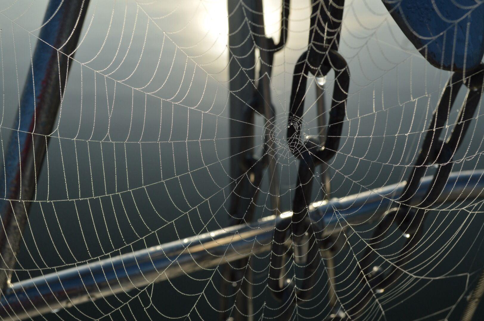 Hämähäkin taidonnäyte